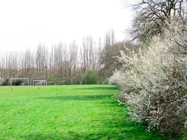 King George V Playing Field in spring (looking E)