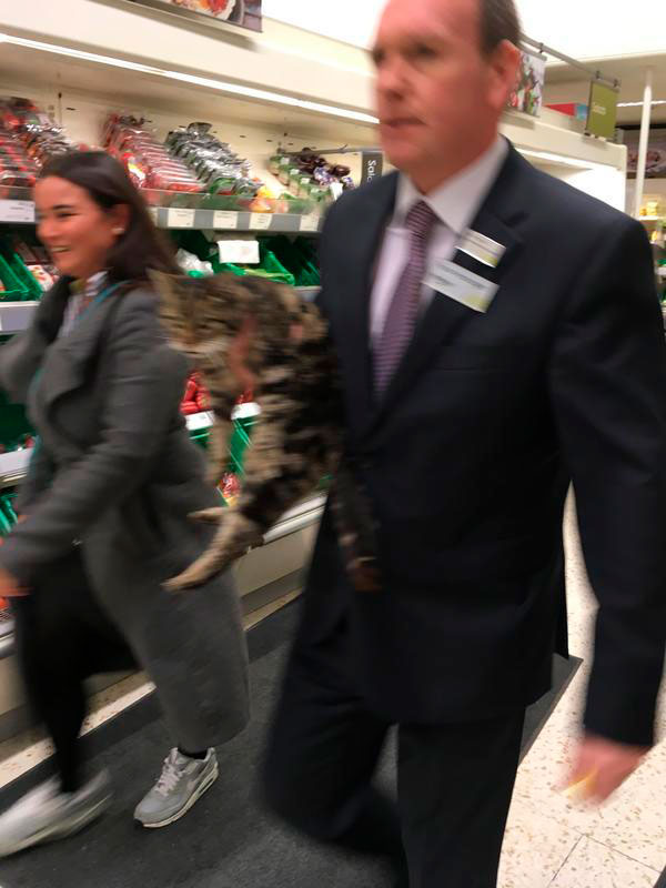 Gemma Wilkinson's snap of Millie being ushered out of Waitrose is a hit on the Next Door Barnet community website