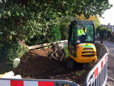 Council excavate roots of historic oak