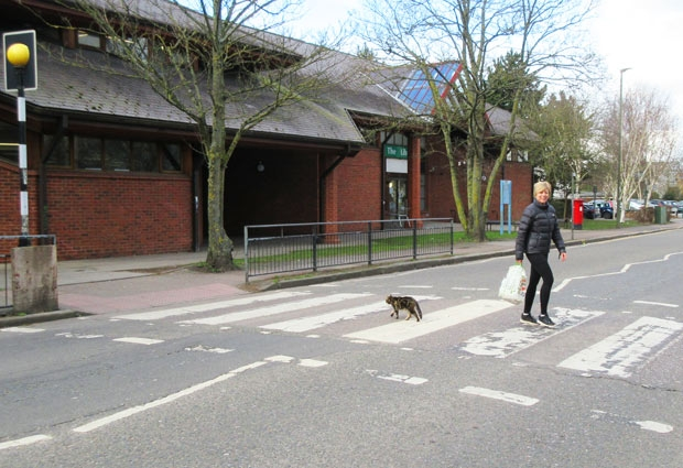 Safety-conscious Millie regularly stops the traffic at she uses the zebra crossing from Chipping Barnet Library to the Spires Shopping Centre