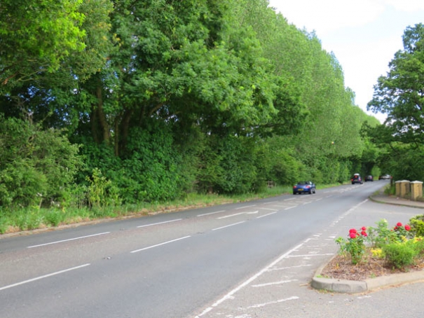 The Poplar trees to be felled on St Albans Road