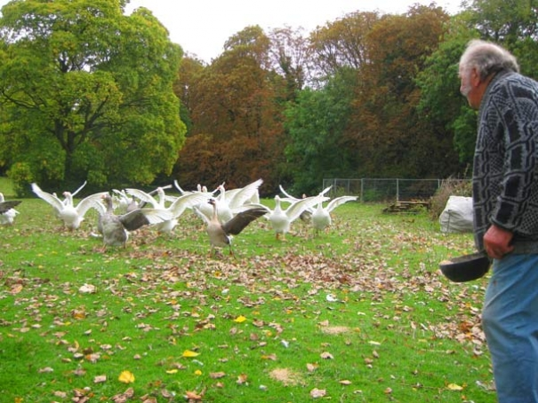 Peter Mason 79, with his poultry flock, has been farming at Whalebones for the last 50 years