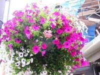 Hanging baskets are not supported by Barnet Council