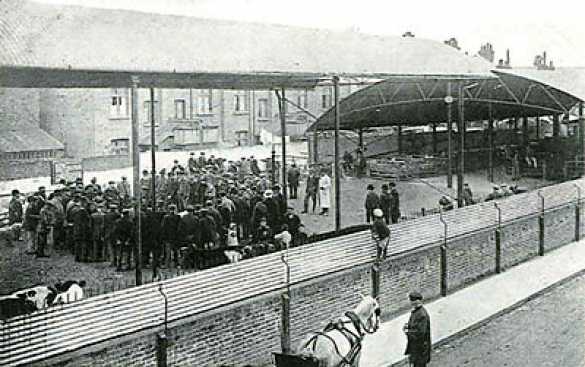 Cattle auction at the Barnet Market site c. 1906